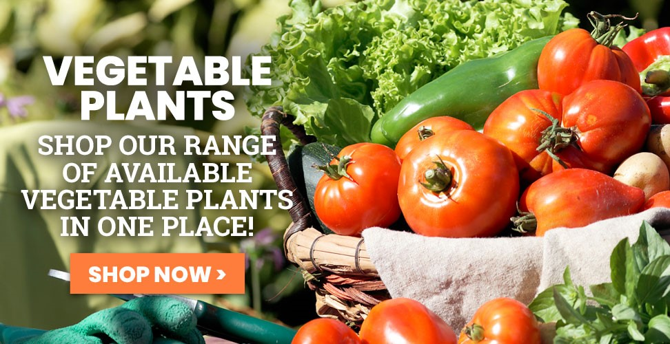 View Our Range of Available Veg Plants