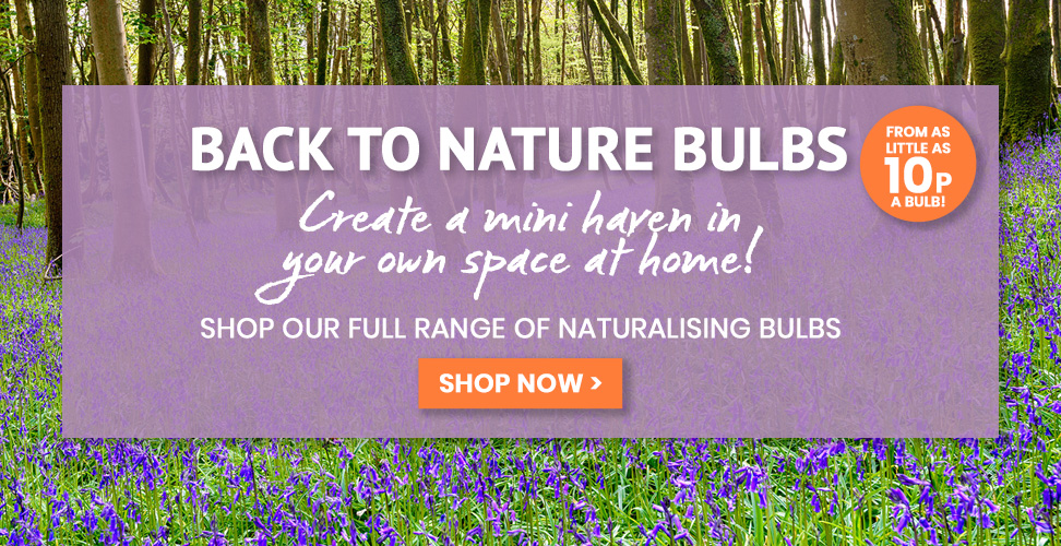 Create a haven with our Back to Nature Bulbs