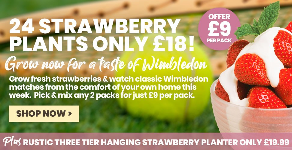 Celebrate Wimbledon at home with fresh strawberries!