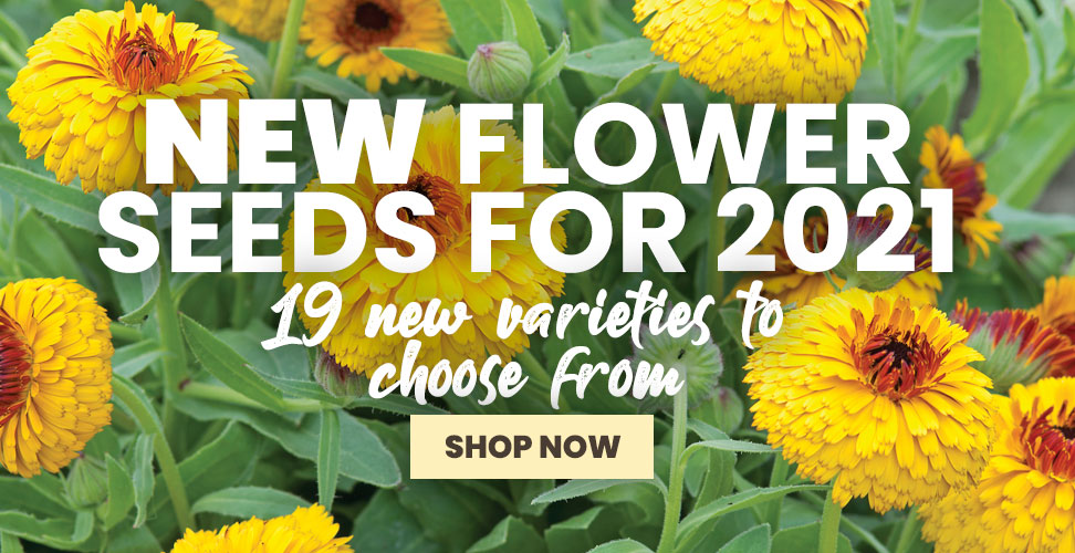 View Our New Flower Seed Range